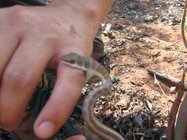 Garden Snakes as Pets